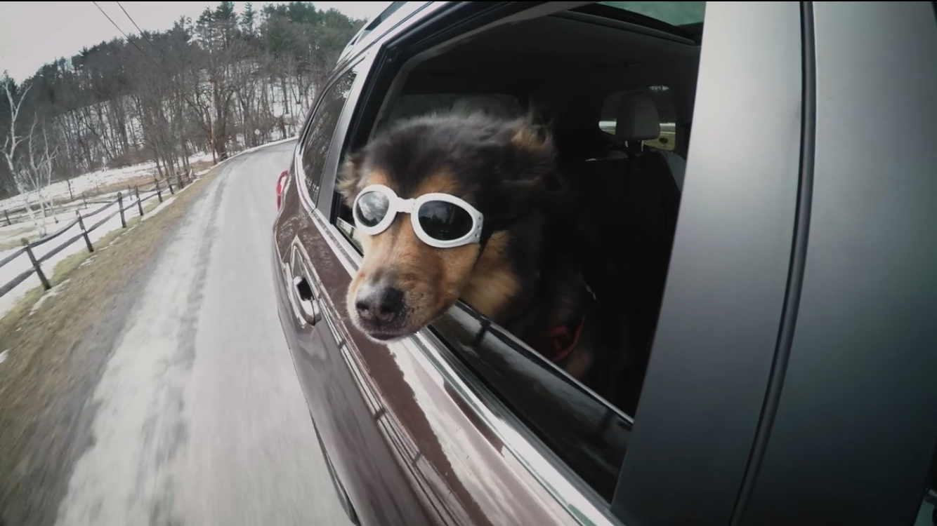Video: Our best gadgets to keep dogs safe in cars