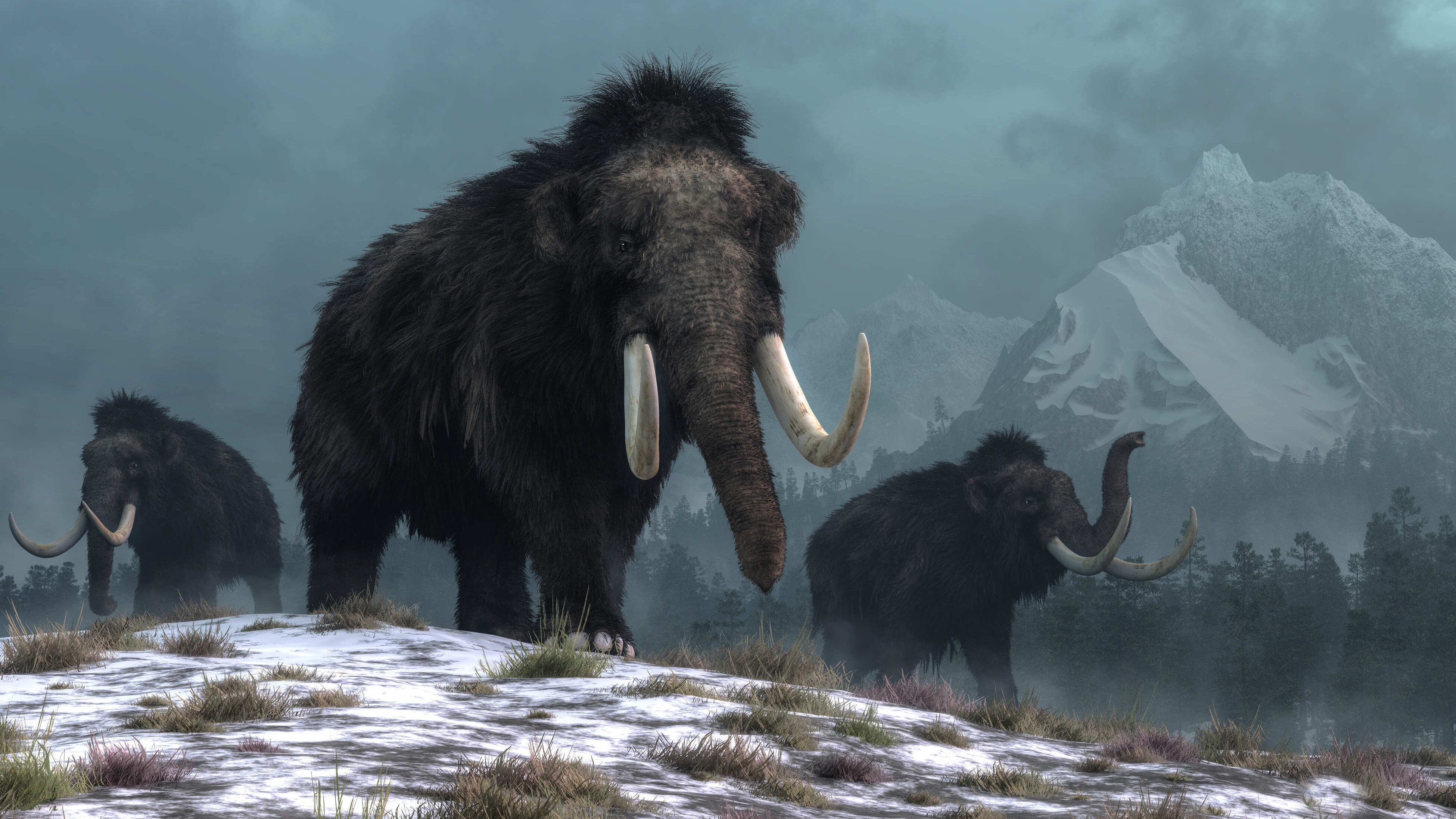 Woolly mammoth extinction blamed on climate change, not human hunting     – CNET