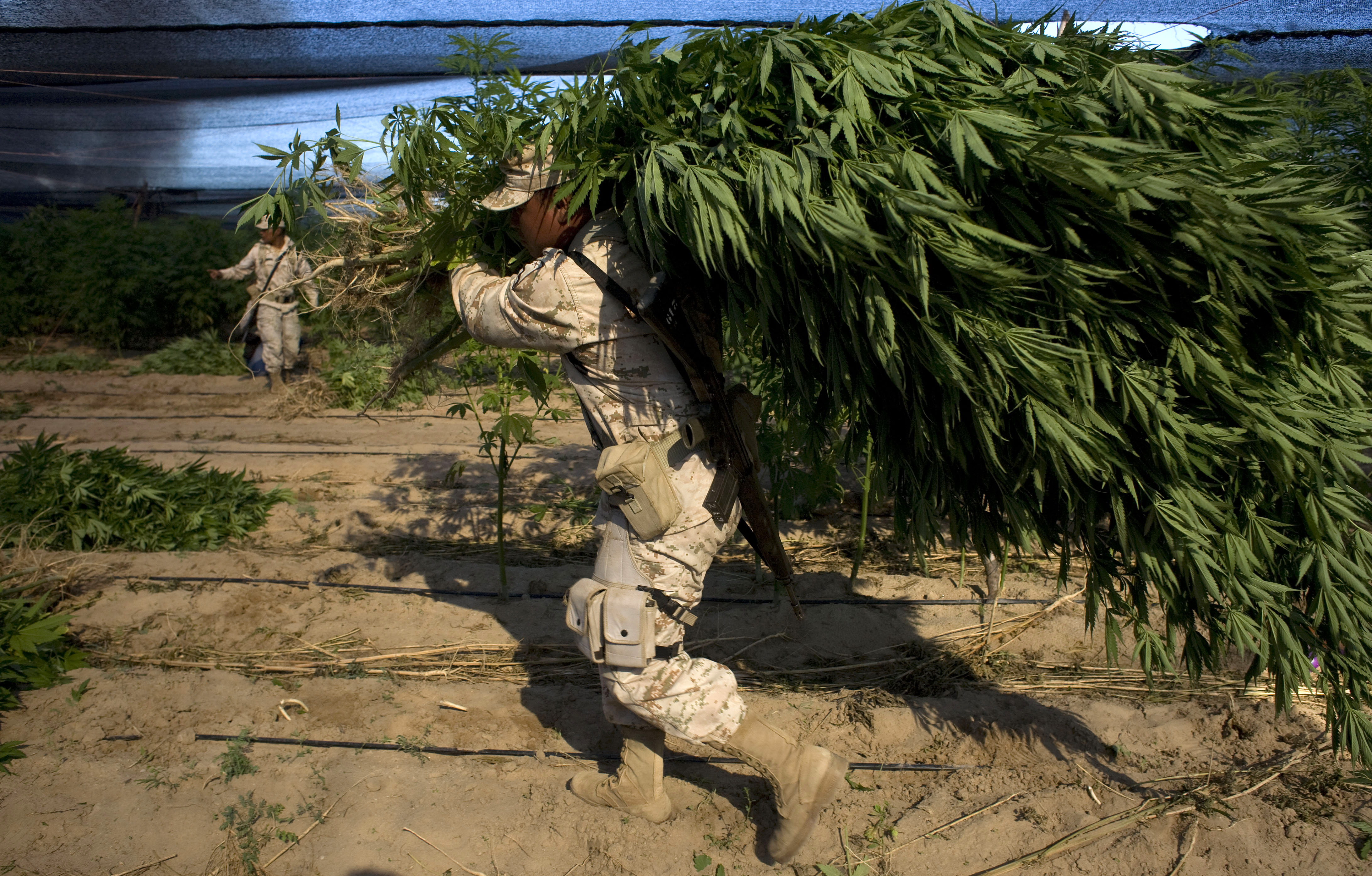Largest illegal operation, Mexico
