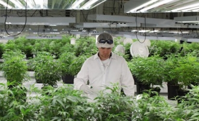 Clever growing at Mettrum