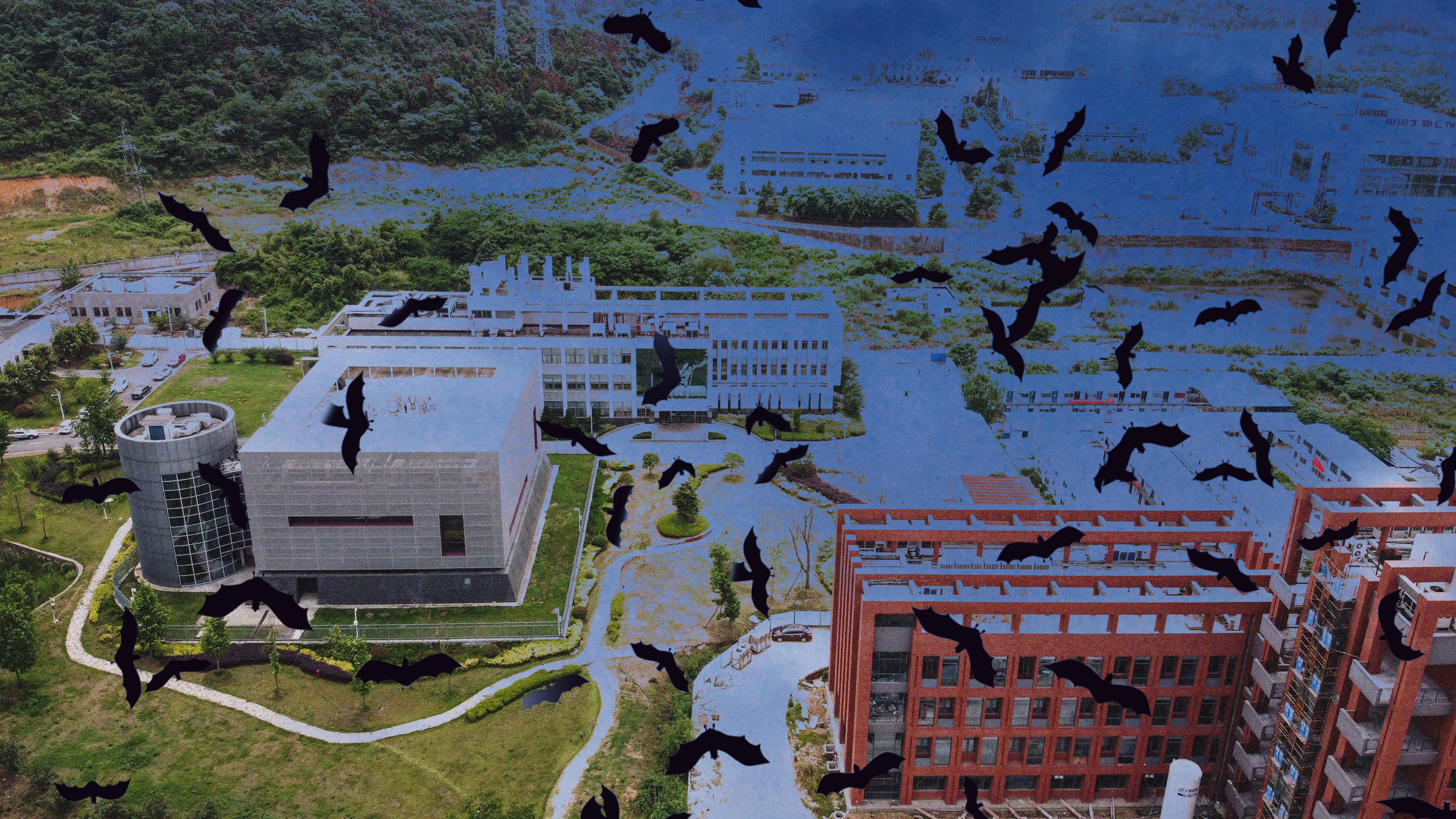 Illustration showing the Wuhan Institute of Virology and bats flying above