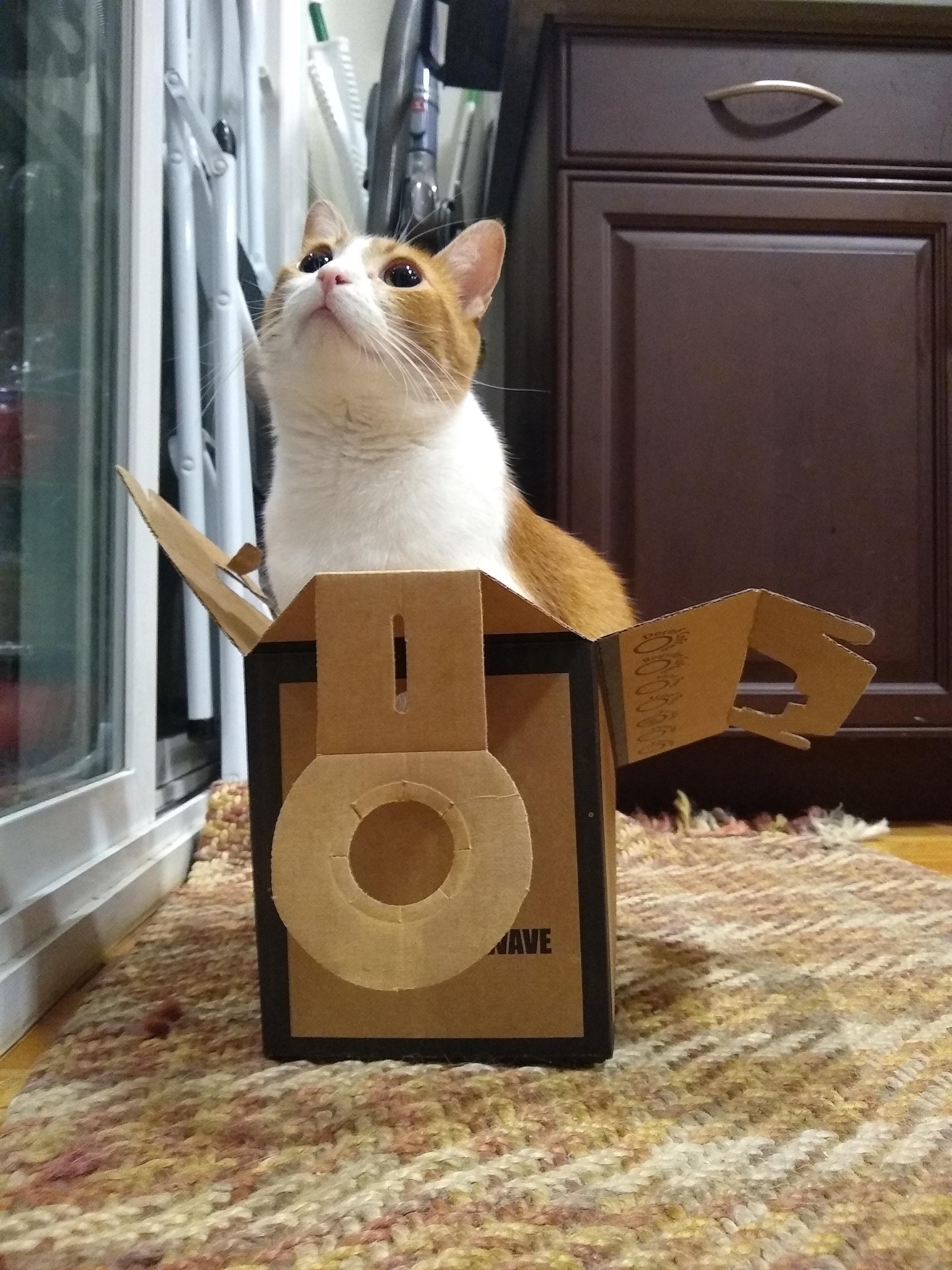small-good-photo-cat-in-a-box