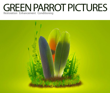 Green Parrot Pictures logo