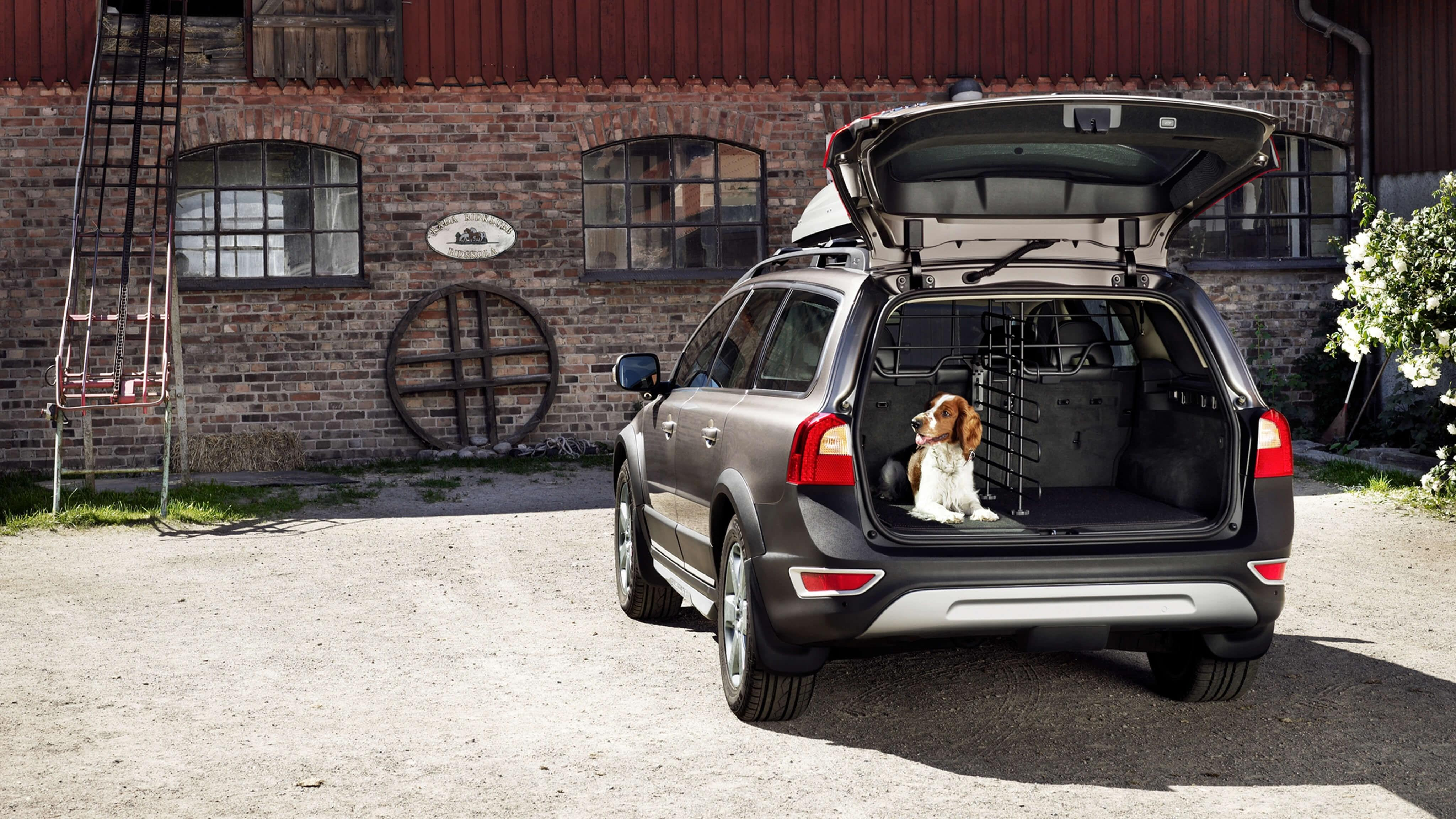 220898-chicago-dogs-find-new-homes-and-can-get-there-safely-thanks-to-volvo-and