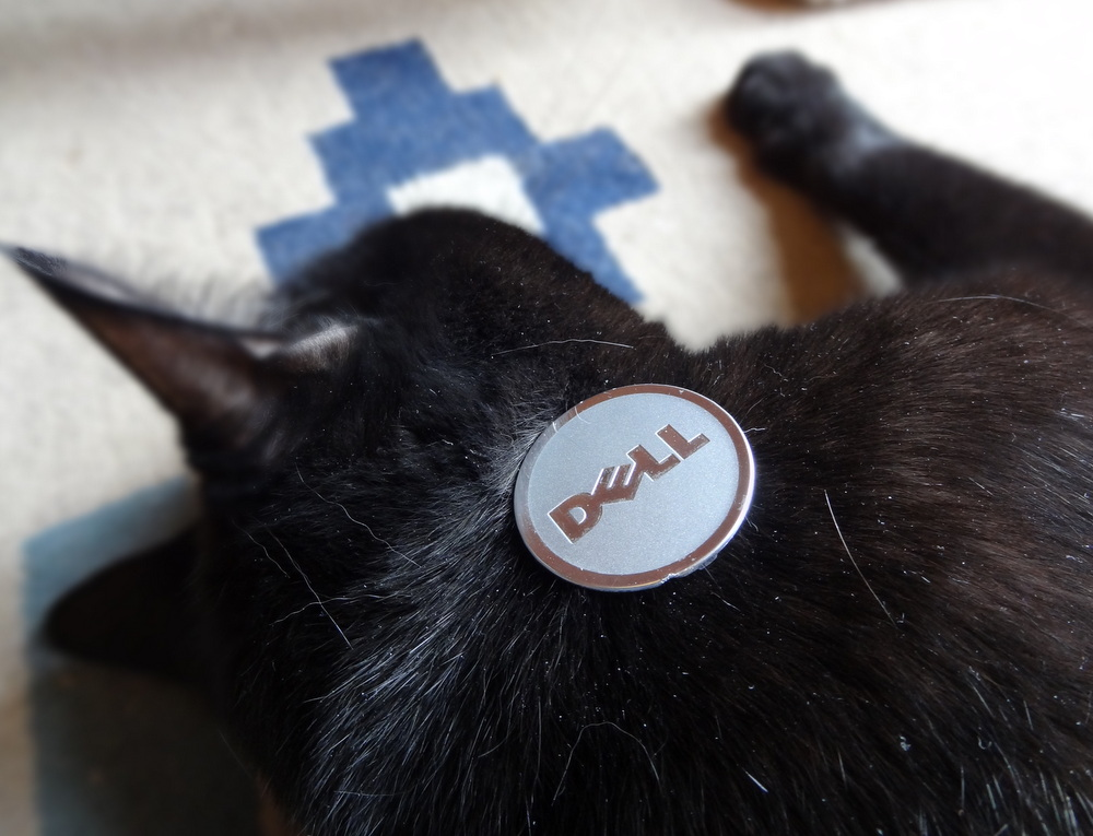 Dell logo on a cat