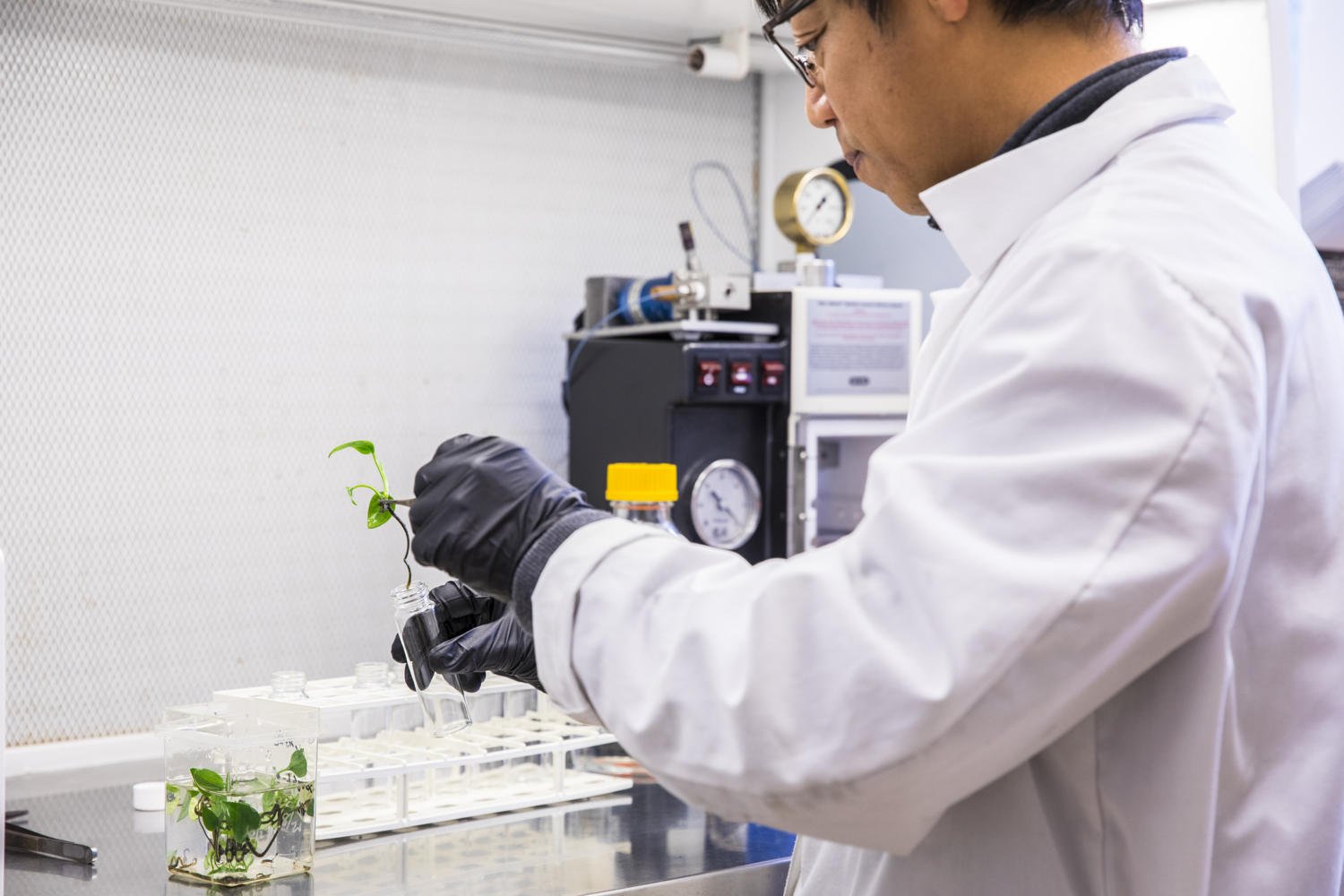 Stewart Strand and Lab assistant Long do work to genetically modify house plants to remove airborne pollutants from the air space