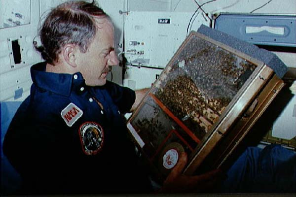 Bees on board