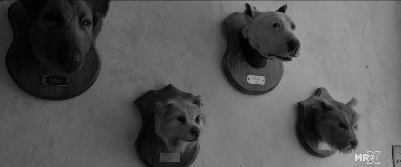 Taxidermied dogs