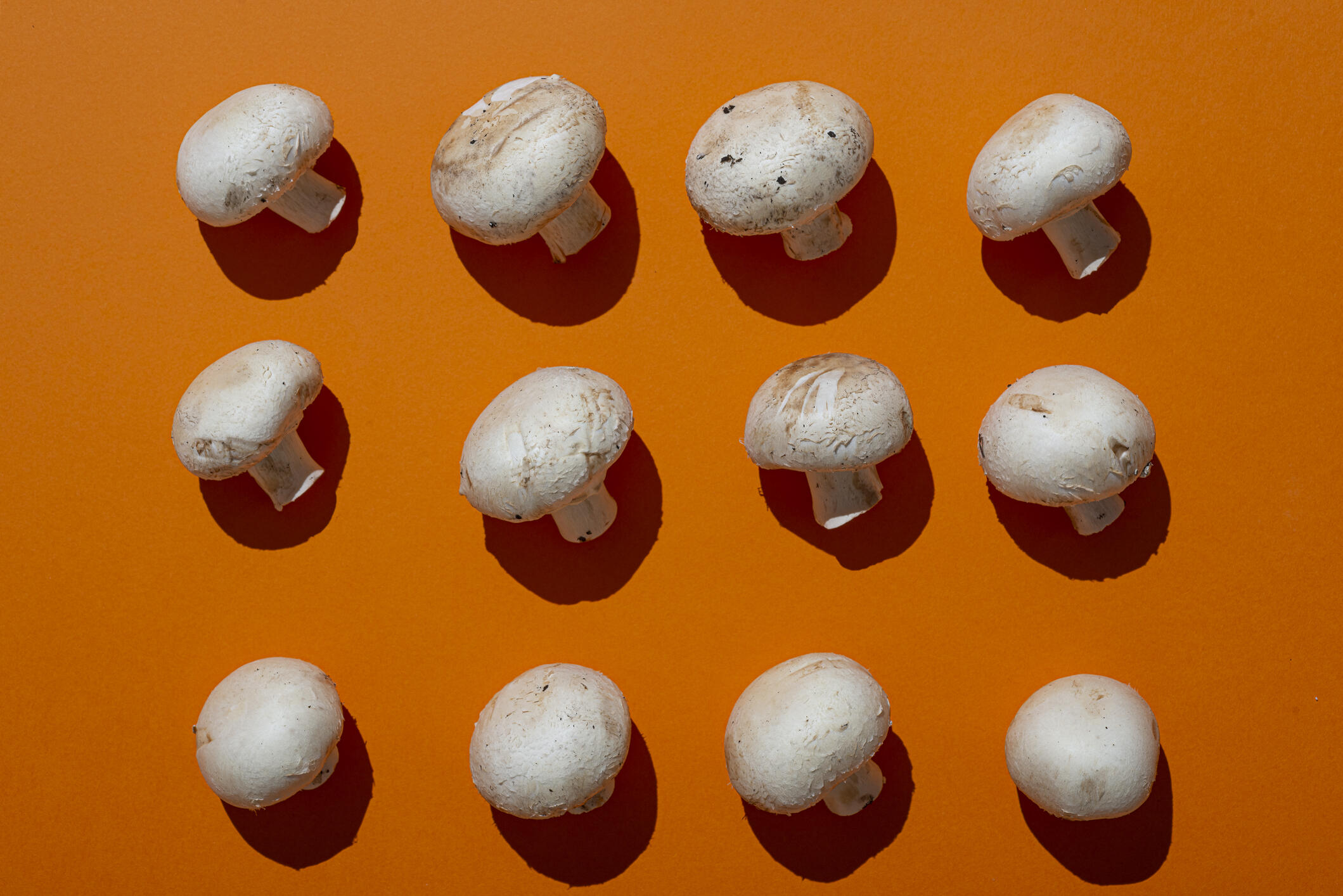 mushrooms on an orange background