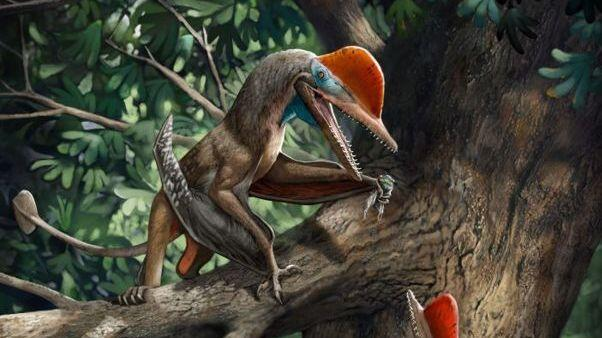"""Scientists find the ancient flying """"Monkeydactyl"""" with the oldest opposing thumb"""