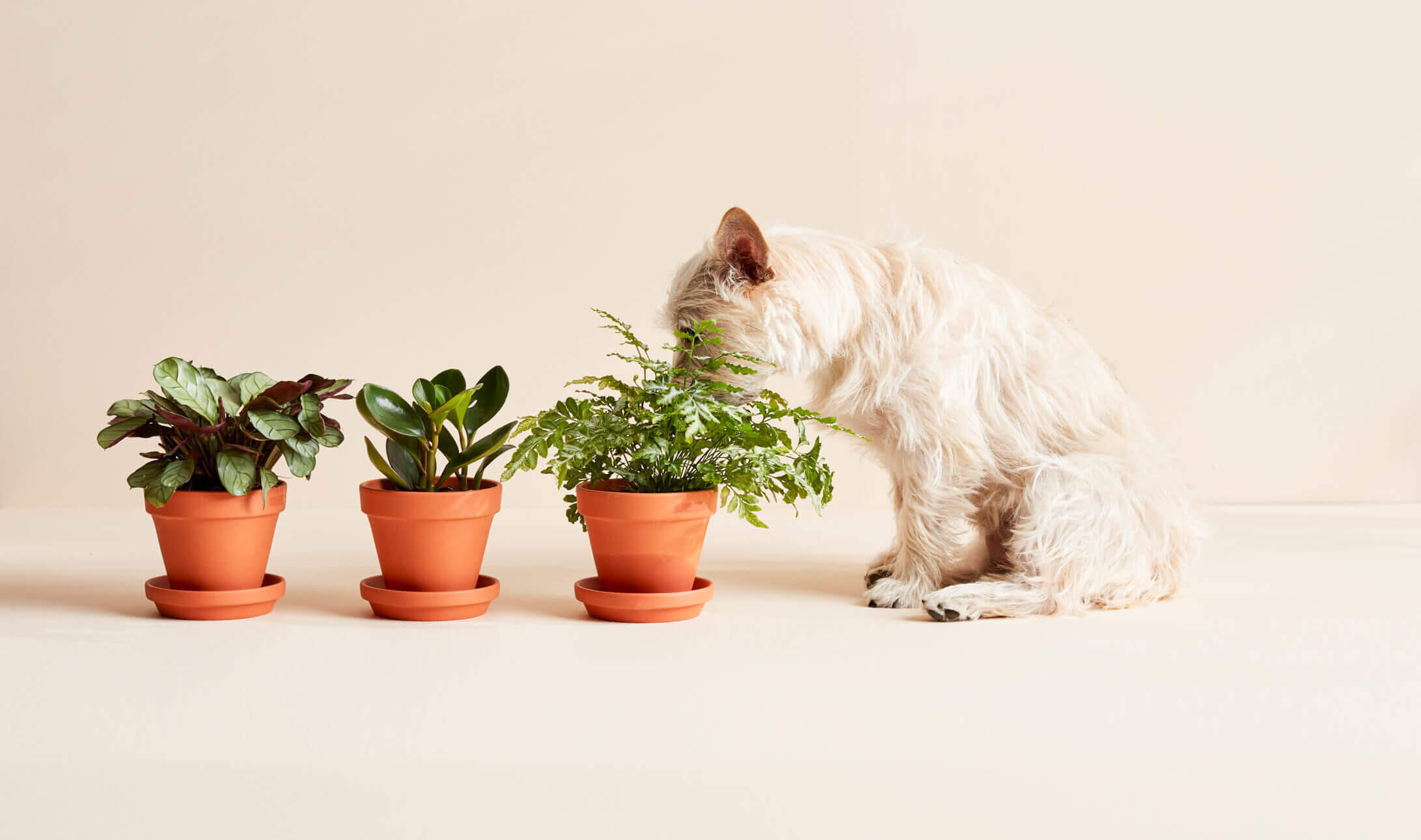 plants-and-pet