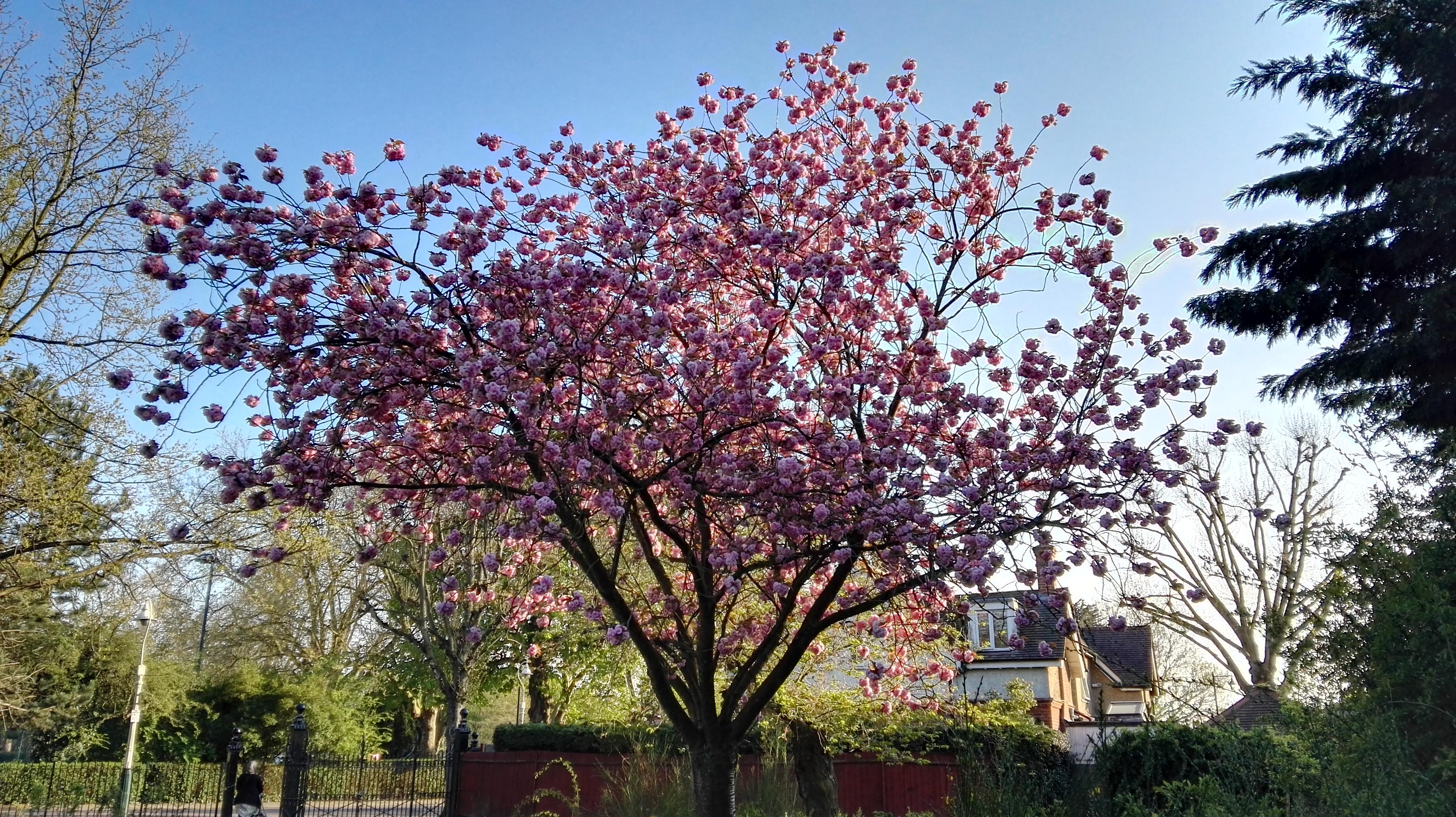 huawei-p8-blossom.jpg