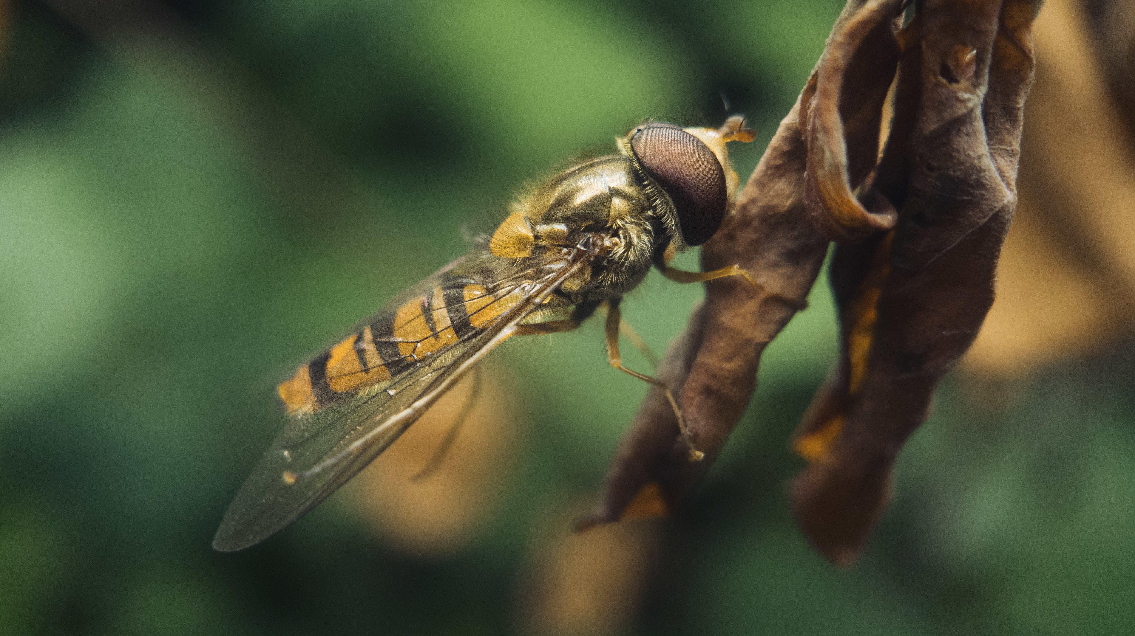 Macro photos (close-up shots) look great even on a phone with these pro  tricks - CNET