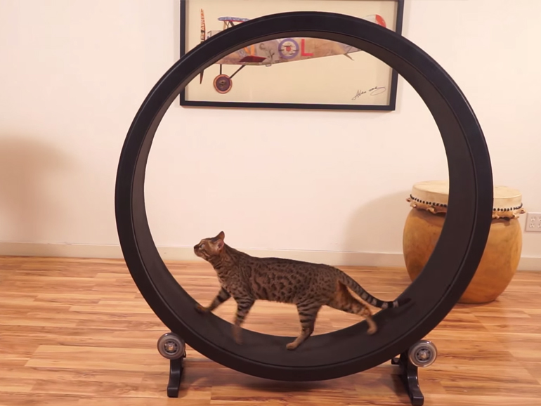 Hamster wheel for cats