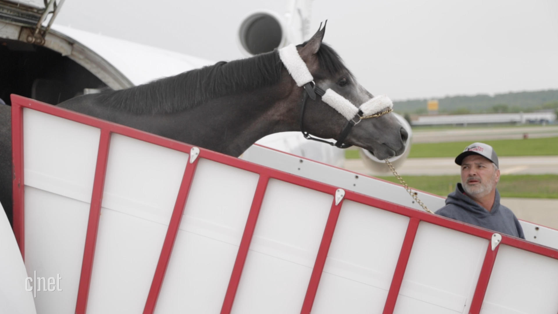 Video: Watch Kentucky Derby horses travel in style aboard 'Air Horse One'