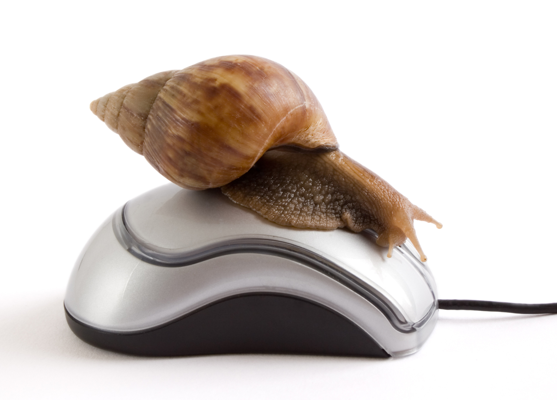getty-slow-internet-snail.jpg