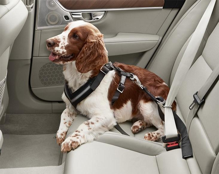 220894-chicago-dogs-find-new-homes-and-can-get-there-safely-thanks-to-volvo-and
