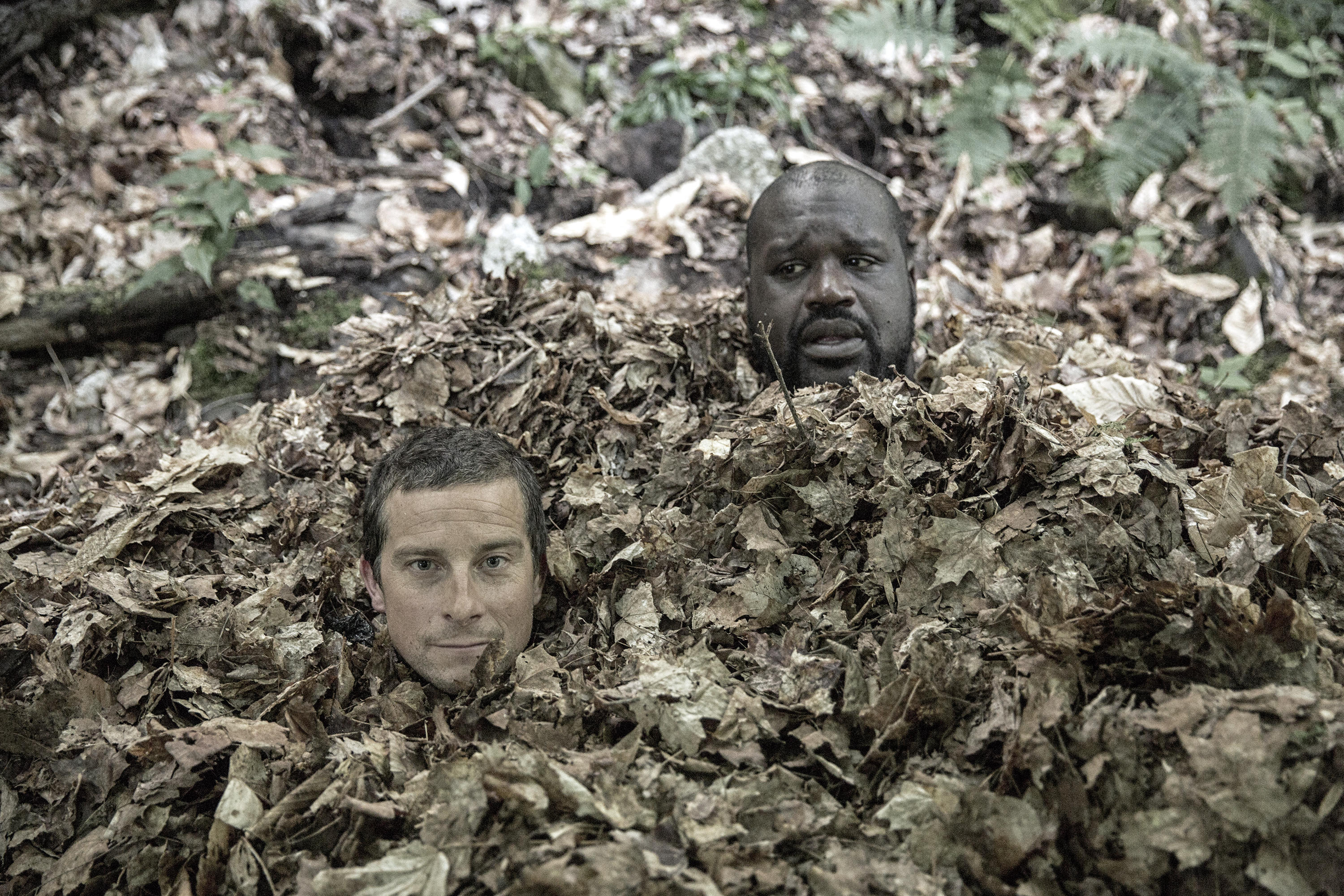 Bear Grylls and Shaquille O'Neal stick their heads out from a pile of leaves