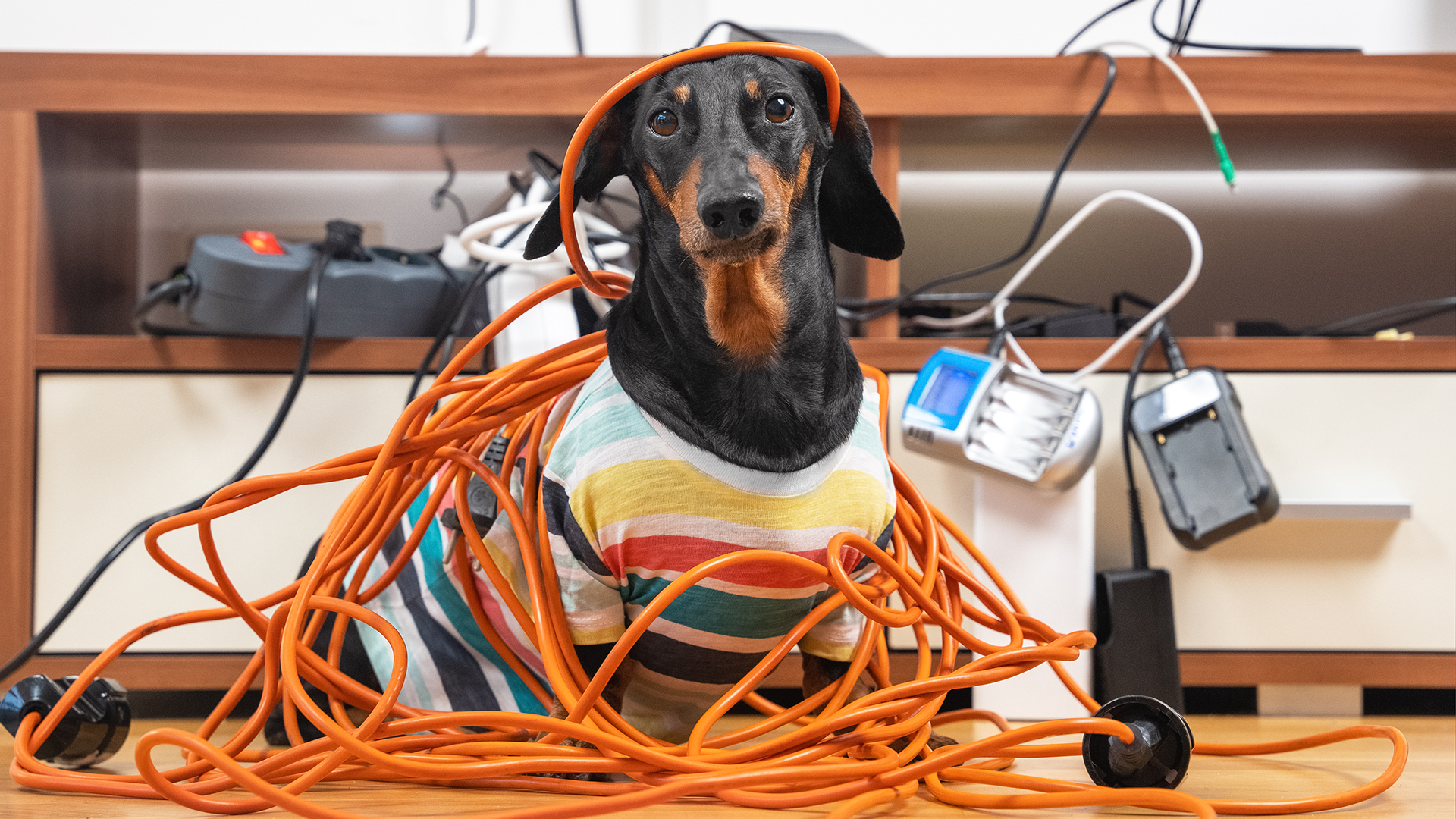 dog-and-cables