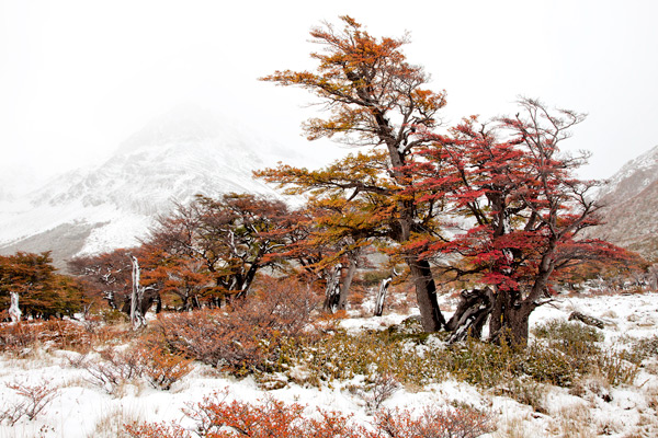 Colours of Patagonia