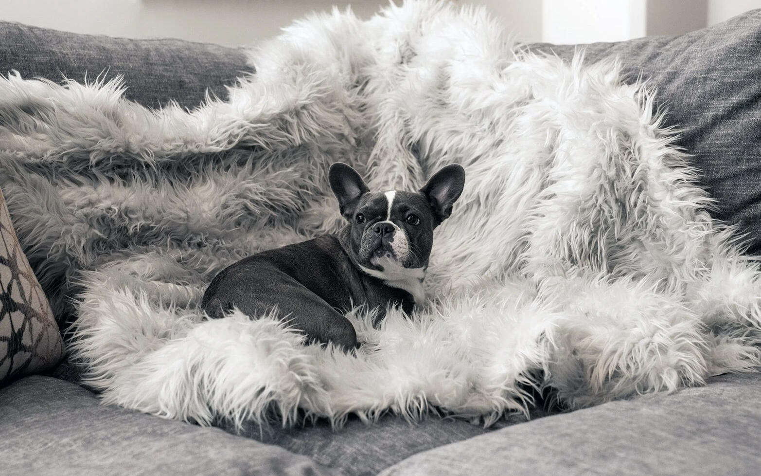 pupprotector-throw-blanket
