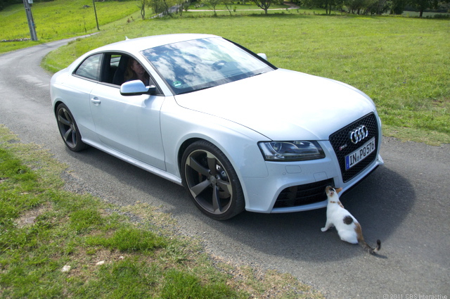 The cat and the RS 5