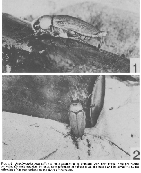 Winners of the Ig Nobel prize for biology studied why certain beetles try to mate with a certain kind of Australian beer bottle, as depicted in these images from the paper.