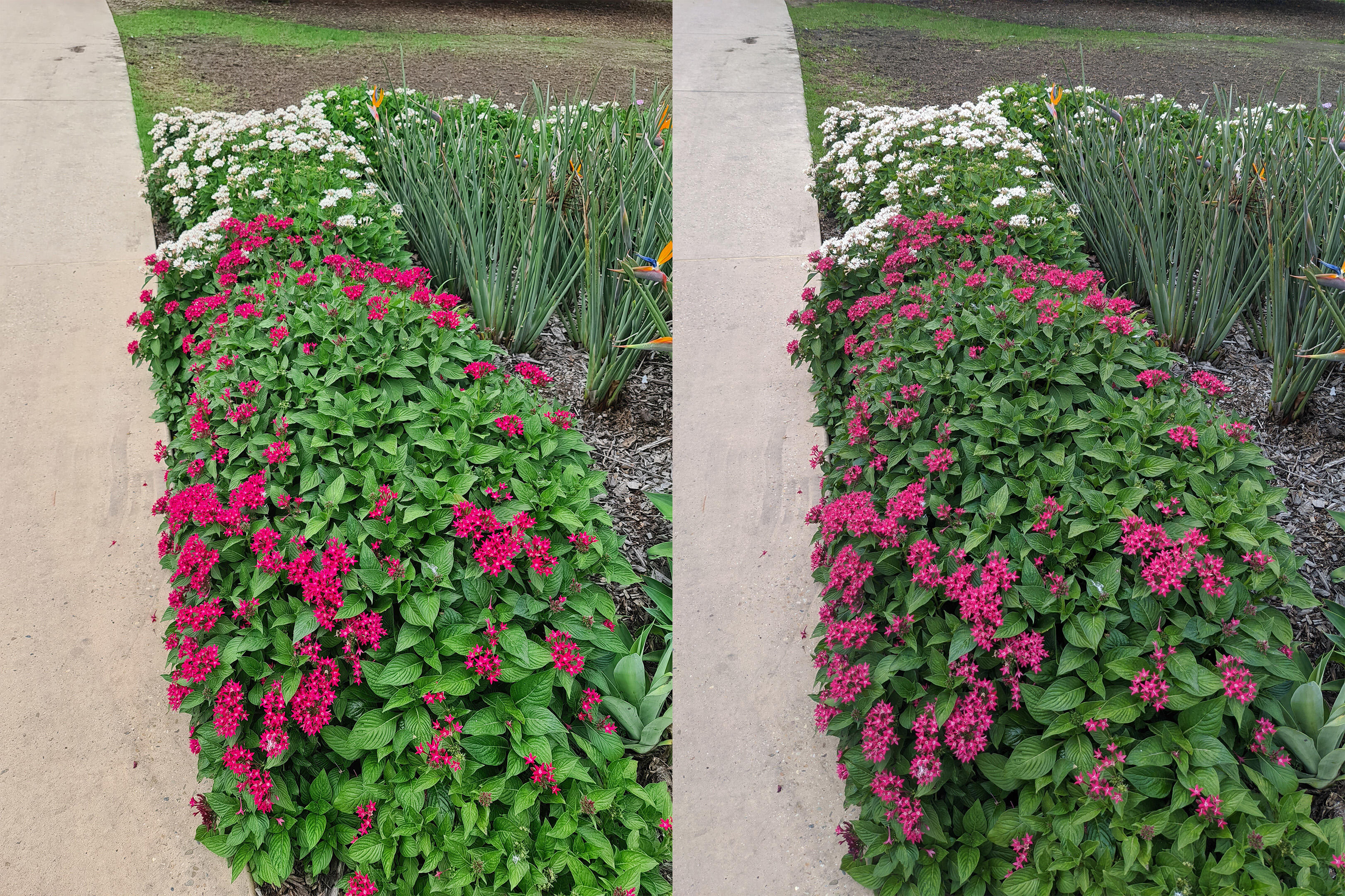 flower-bed-compare