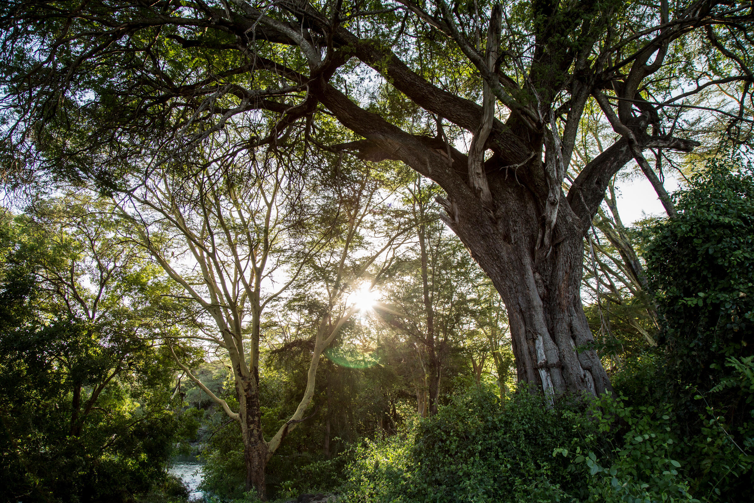 , Apple is helping launch a $200 million fund to restore forests – Source CNET Tech, iBSC Technologies - learning management services, LMS, Wordpress, CMS, Moodle, IT, Email, Web Hosting, Cloud Server,Cloud Computing