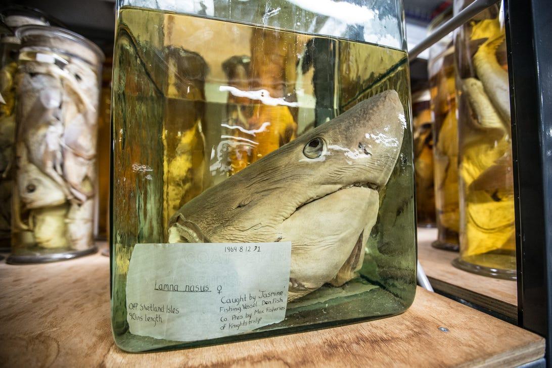 natural-history-museum-behind-scenes-122.jpg