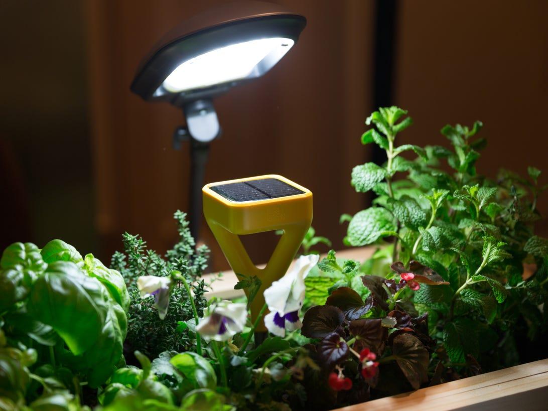 edyn-plant-sensor-product-photos-1.jpg