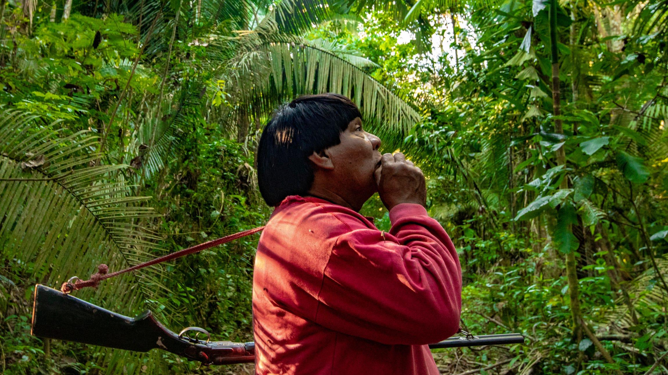 rainforest-roadtrip-7633