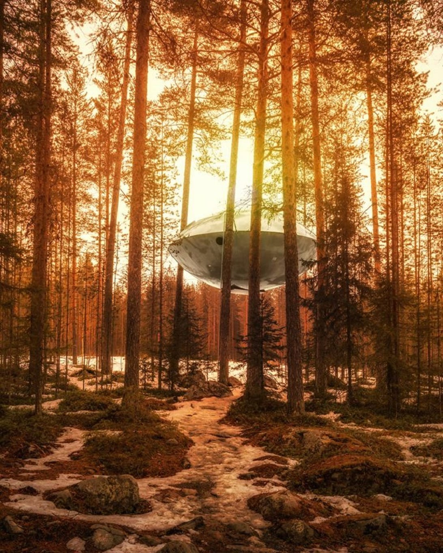 treehousesufo-1.jpg