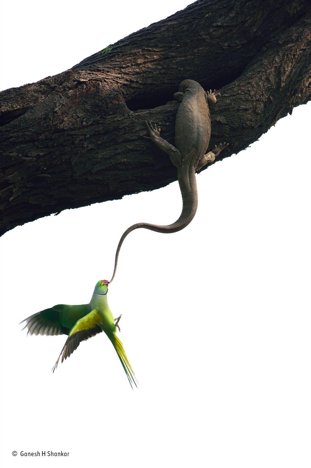 ganesh-h-shankarwildlife-photographer-of-the-year-birds-winner.jpg