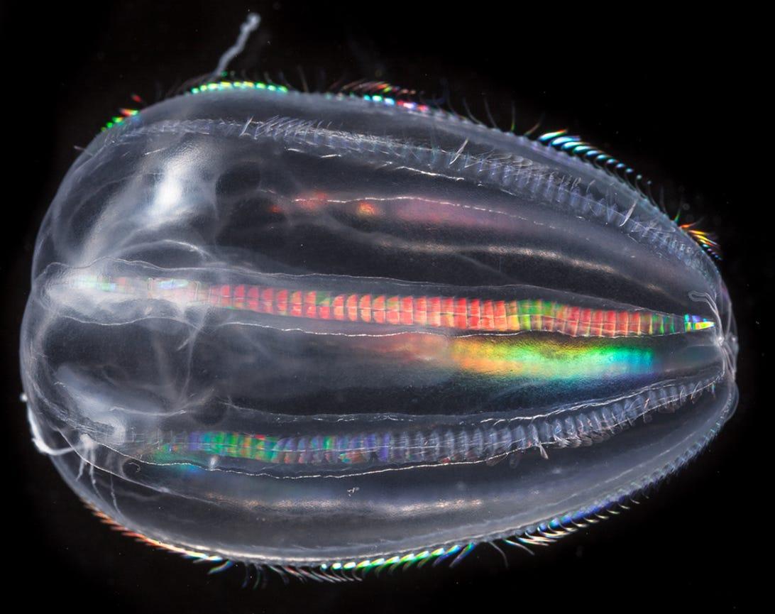 plankton01.jpg