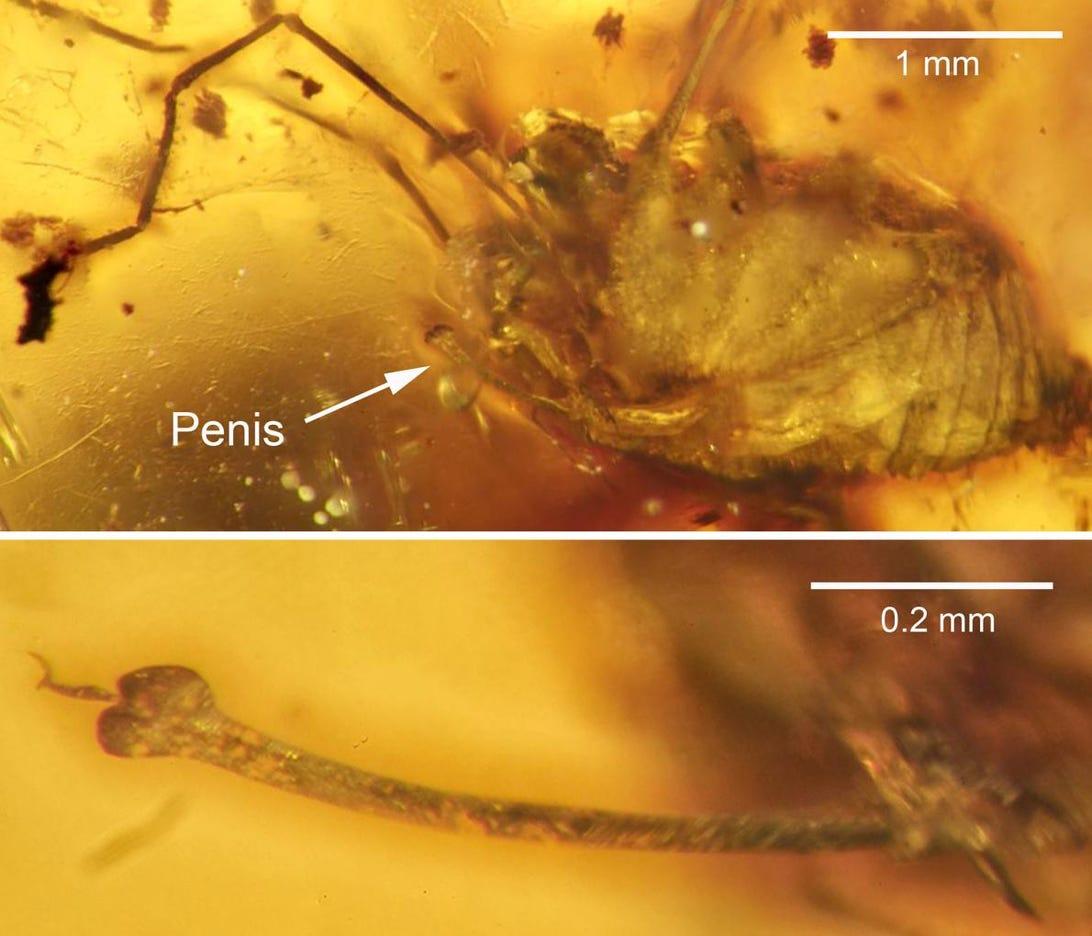 1-spider-erection-amber.jpg
