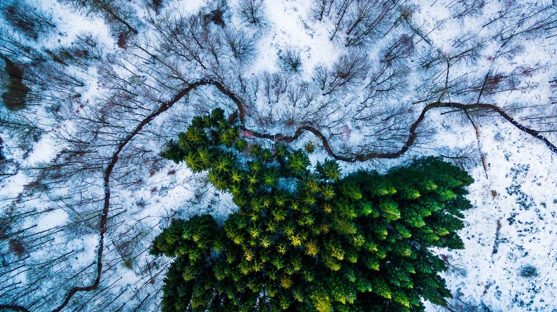 1st-prize-winner-category-naturewildlife-kalbyris-forest-denmark-by-mbernholdt.jpg