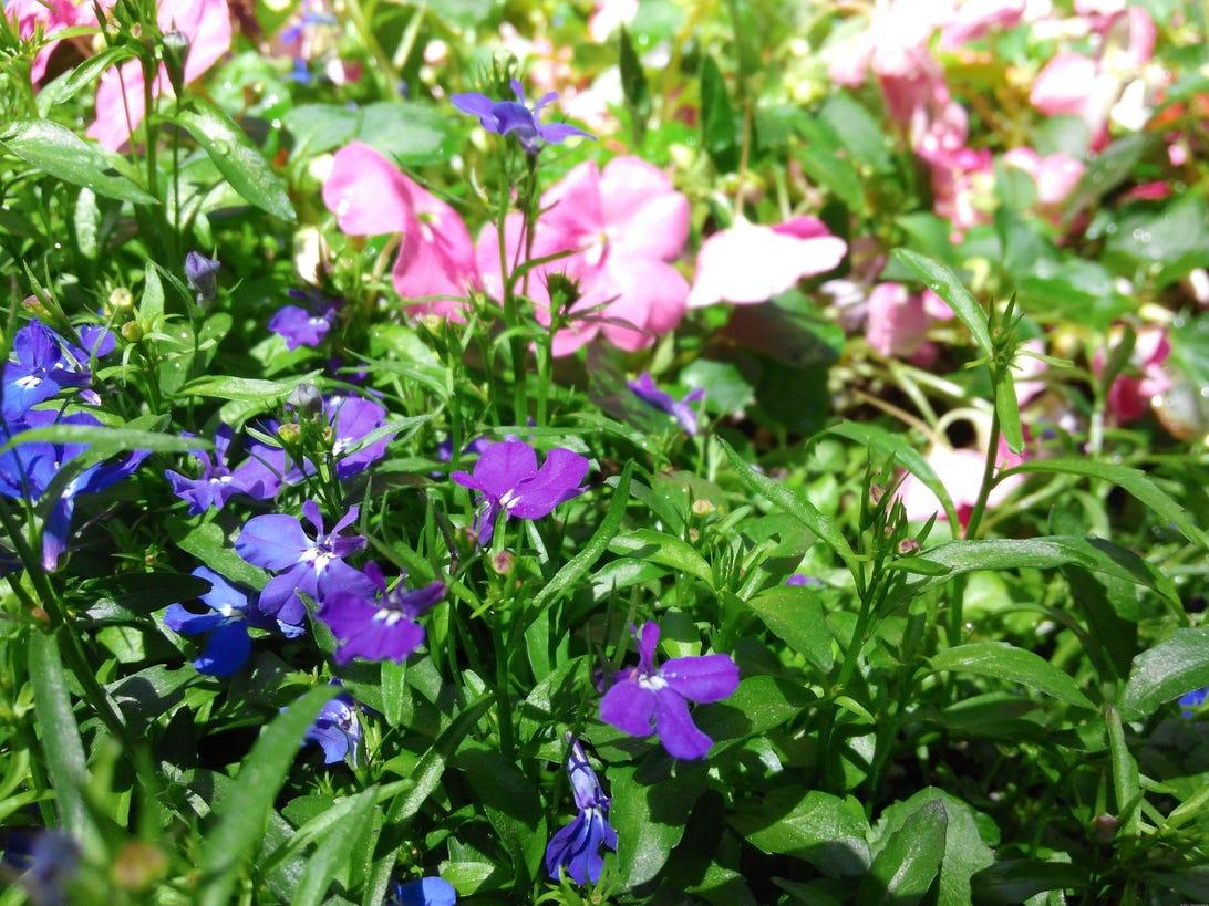 35756625_-_flowers.jpg