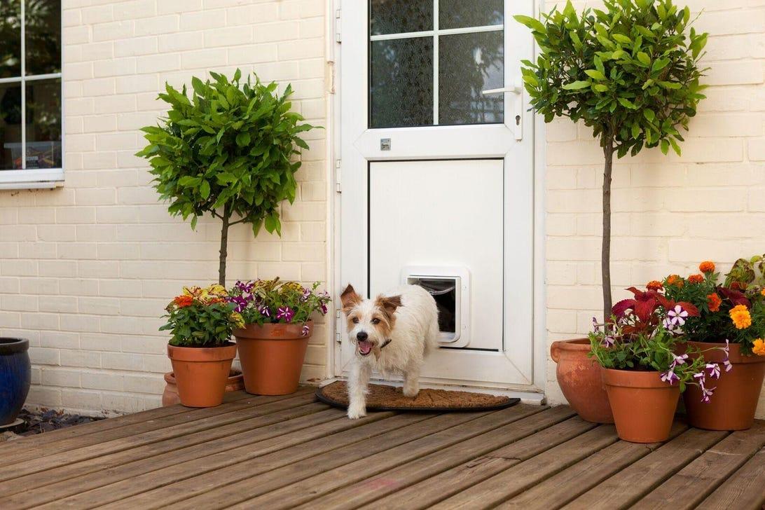 sureflap-microchip-pet-door-dog-outside-upvc-door