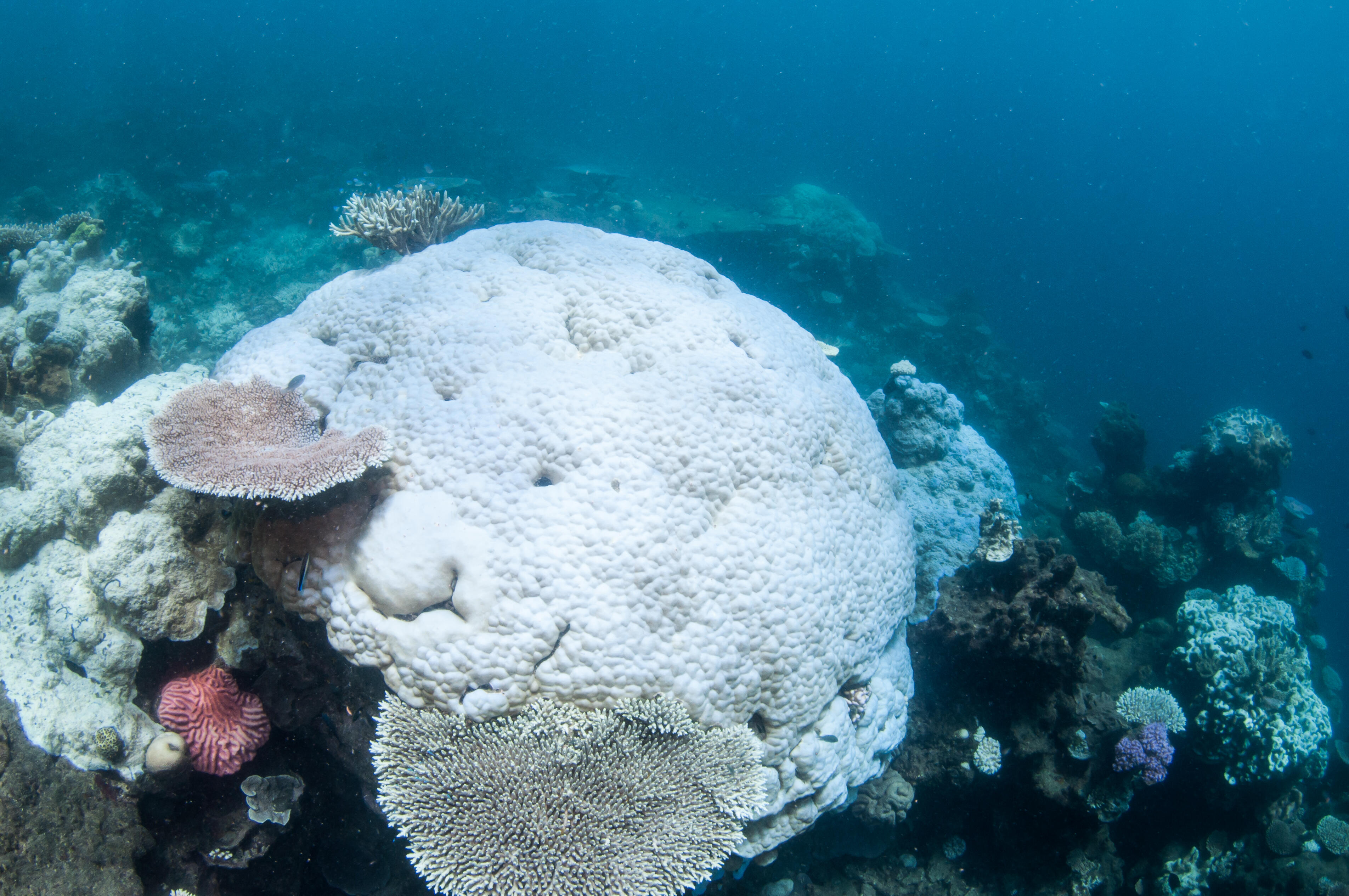 Coral Bleaching on the Great Barrier Reef in Australia