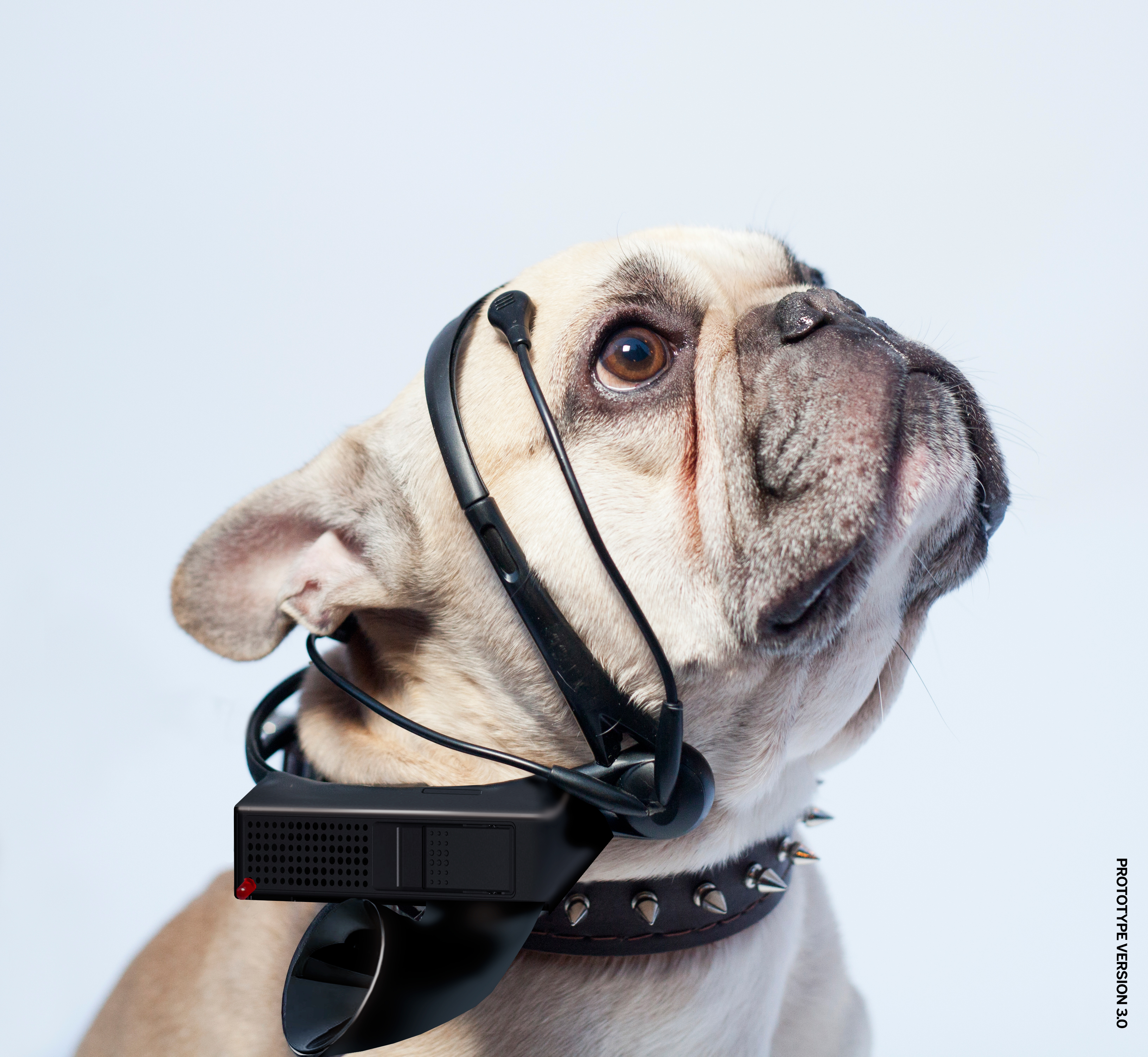 No More Woof device on dog