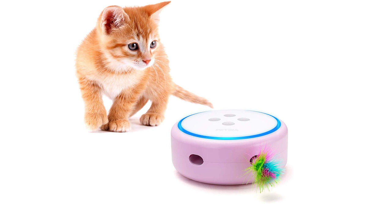 This interactive toy that cats love