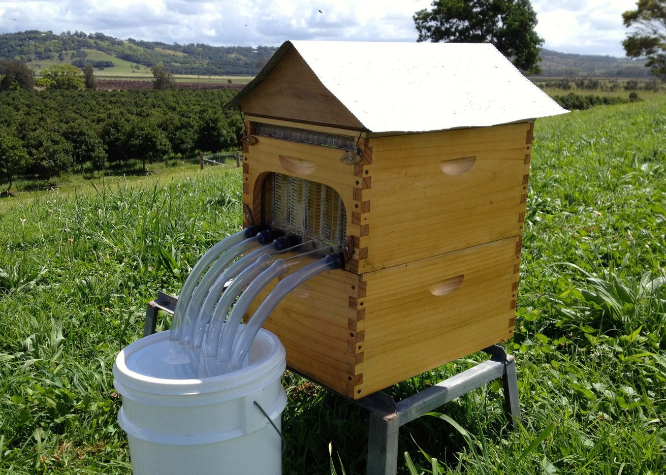 Flow Hive with bucket