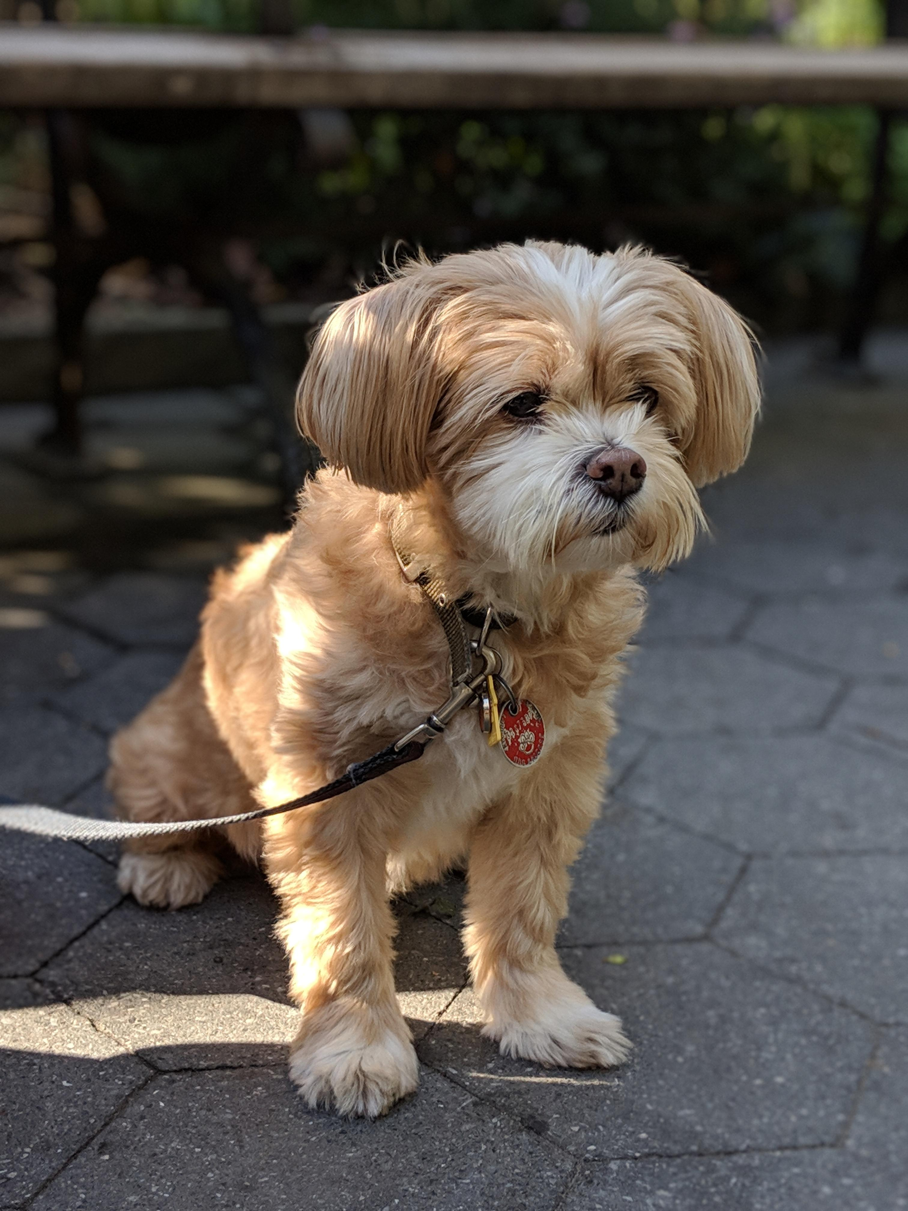 dog-with-portrait-mode