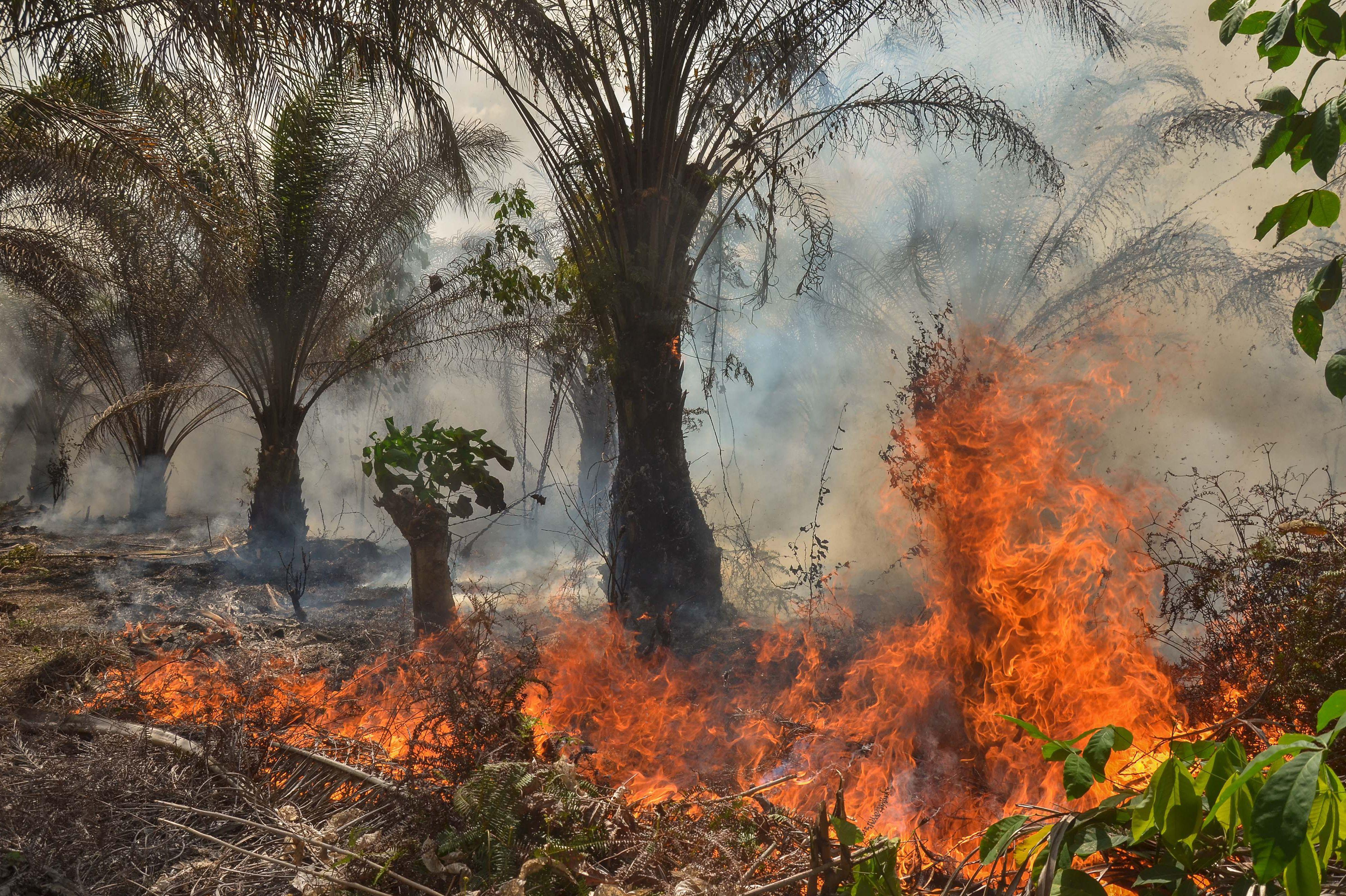 INDONESIA-ENVIRONMENT-FIRE