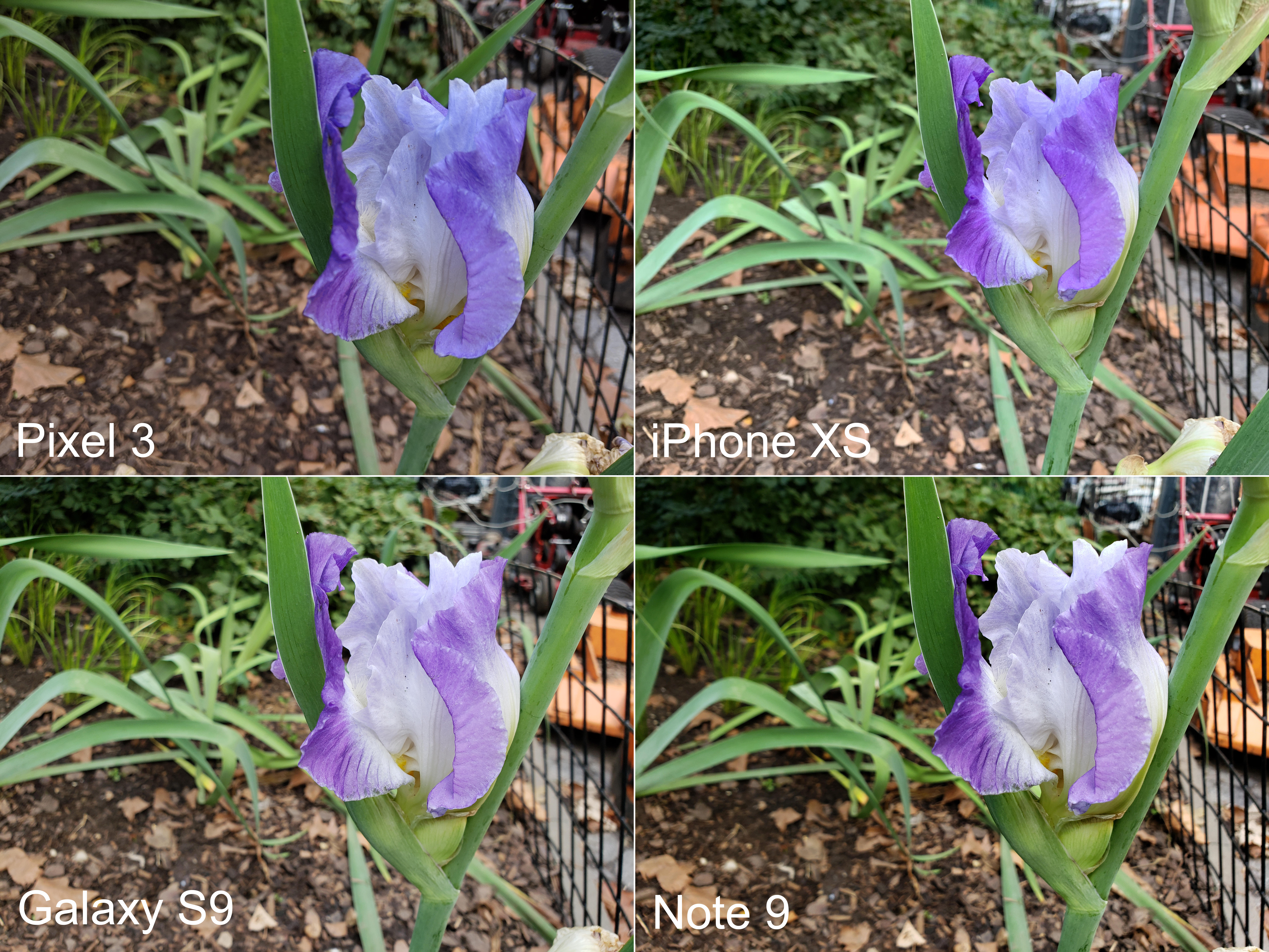 pixel-3-comparison-all-4-phones-flower