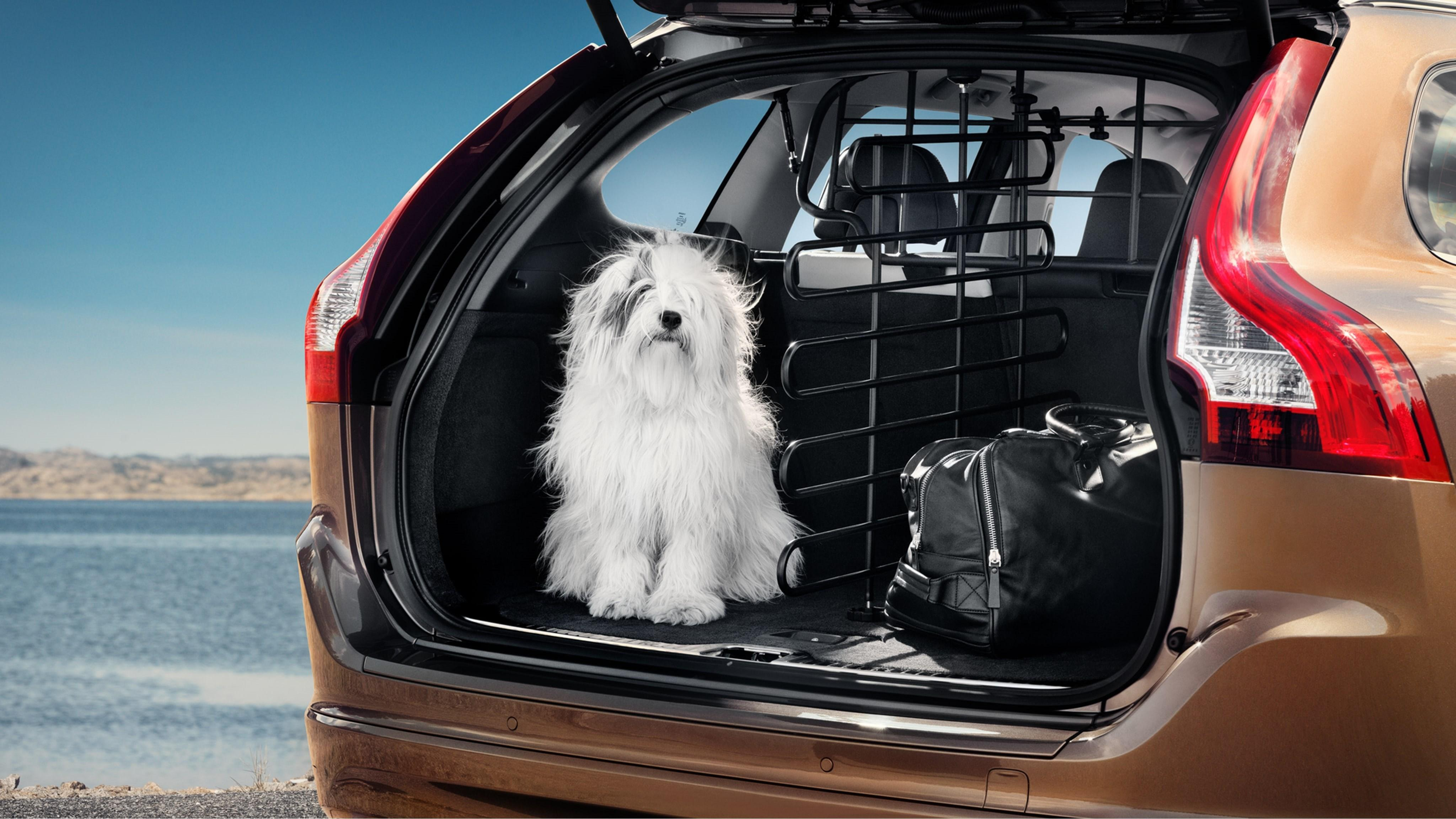 220900-chicago-dogs-find-new-homes-and-can-get-there-safely-thanks-to-volvo-and