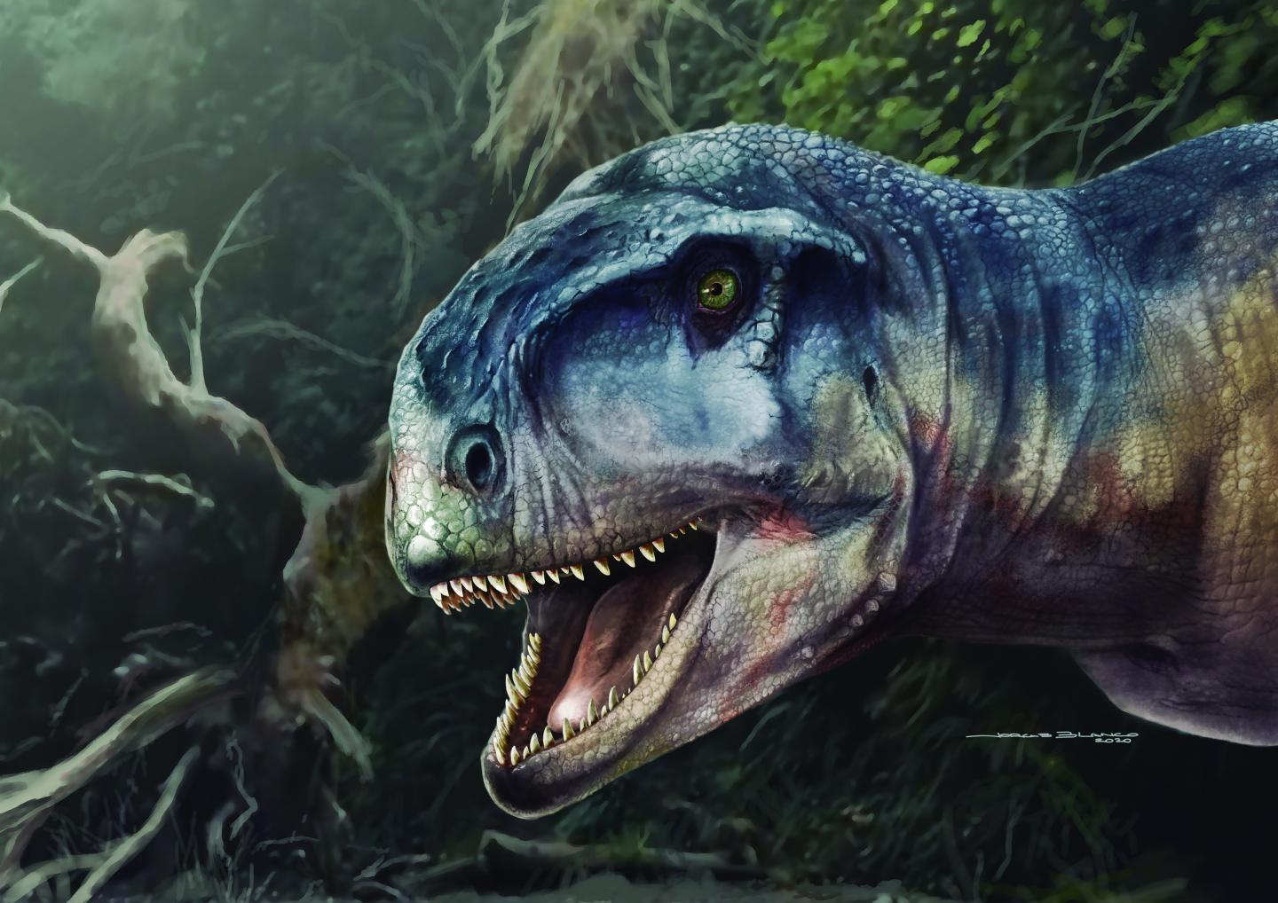 <p>Llukalkan aliocranianus was a large meat-eating dinosaur that would have been at the top of the food chain.</p>