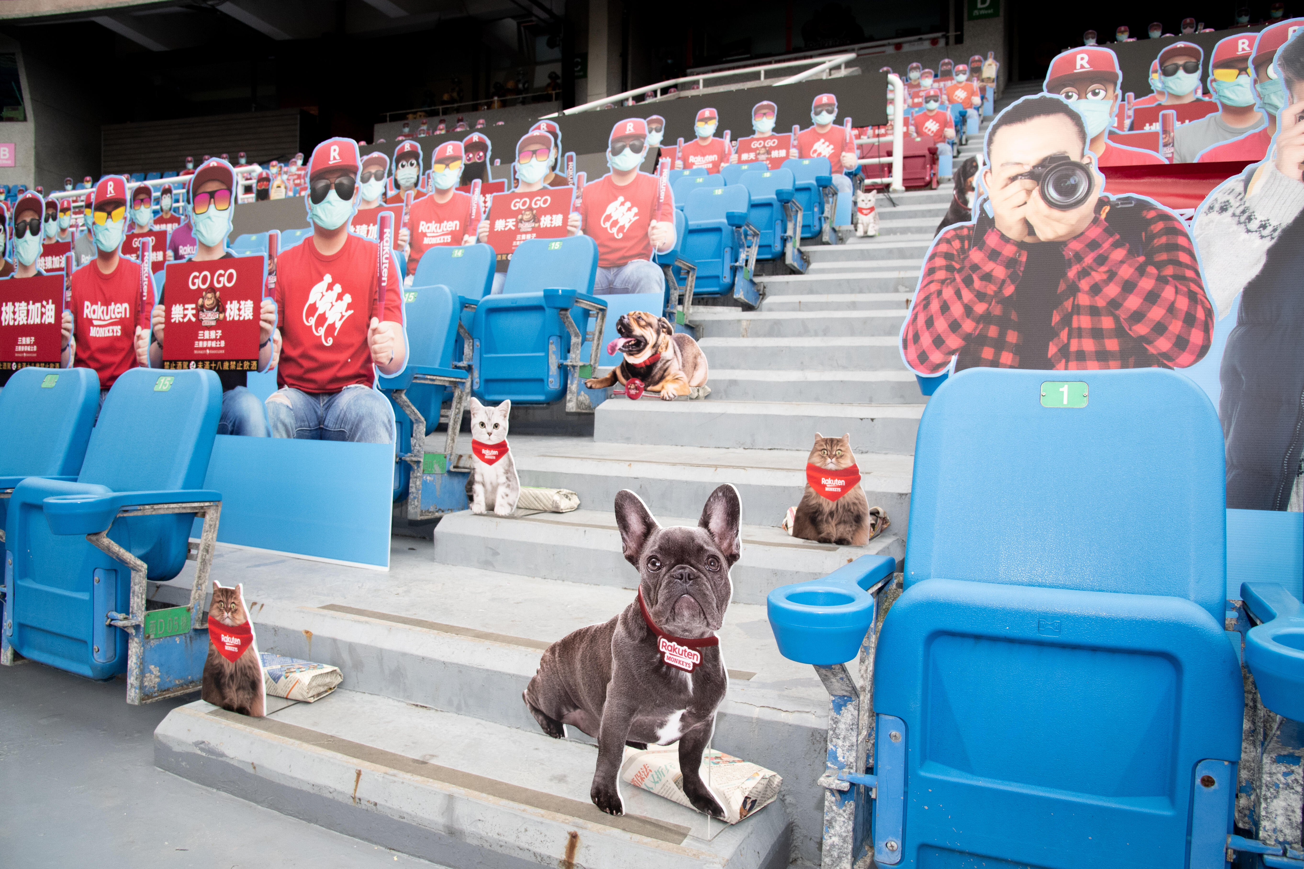 Fans, photographers and pets in the stands in Taiwan.